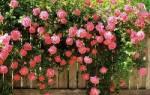 Определить цветок по описанию