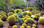 Кактусы в природе