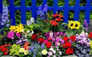 Красивые летние цветы
