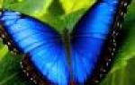 Гиппеаструм цветок