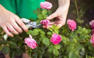 Летняя обрезка роз