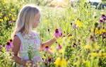 Желтые полевые цветы названия