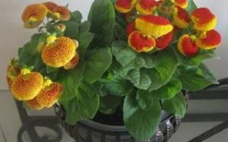 Канцелярия цветок