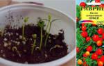Растение с оранжевыми ягодами