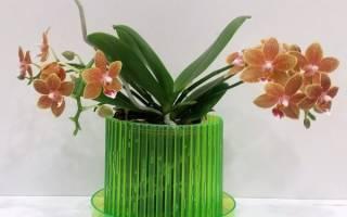 В каком горшке должна расти орхидея