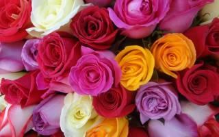 Что значит цвет роз