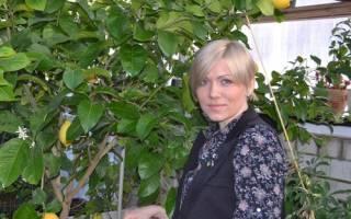 Опадают листья у лимона