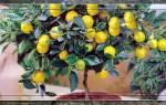 Лимон в горшке как ухаживать