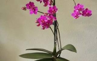 Грунт для орхидеи фаленопсис