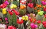 Как часто нужно поливать кактус
