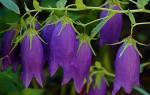 Цветы садовые каталог с фотографиями и названиями