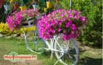 Ампельные сорта петунии