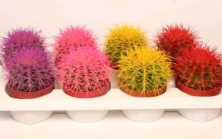 Все виды кактусов