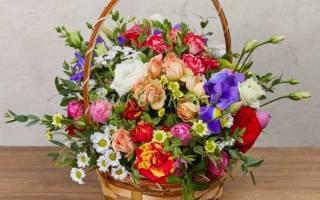 Как поливать цветы в губке