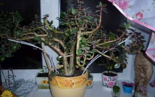 Как формировать денежное дерево
