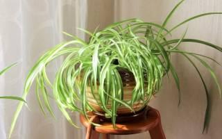 Низкорослые комнатные растения