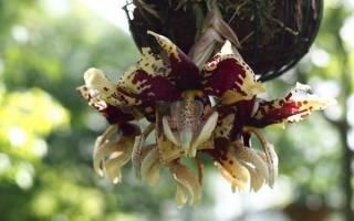 Орхидеи самые красивые