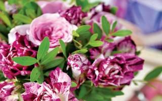 Полосатые розы сорта