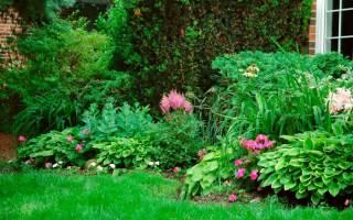 Тенелюбивые кустарники для сада