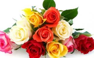 Какая роза самая красивая