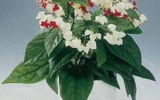 Комнатные цветы с белыми цветами